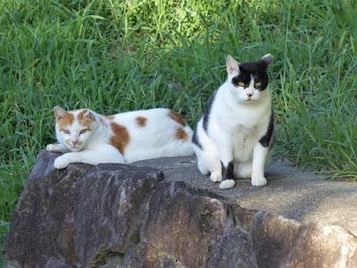 山田池公園 実りの里 棚田 2匹の猫