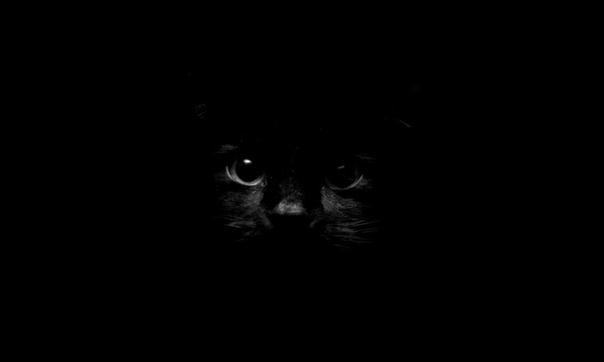cat black hd wallpaper desktop | high definitions wallpapers