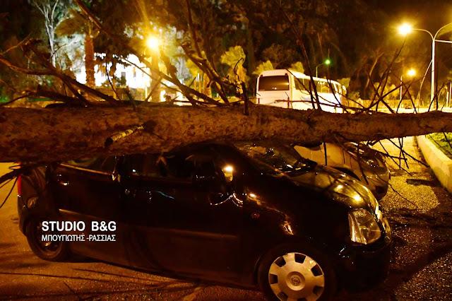 Από τους θυελλώδεις ανέμους έπεσαν δέντρα και πλάκωσαν αυτοκίνητα στο Ναύπλιο (βίντεο)