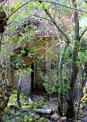 Bosque de castaños en el Monasterio de Santa Cristina de Ribas del Sil en la Ribera Sacra, Orense