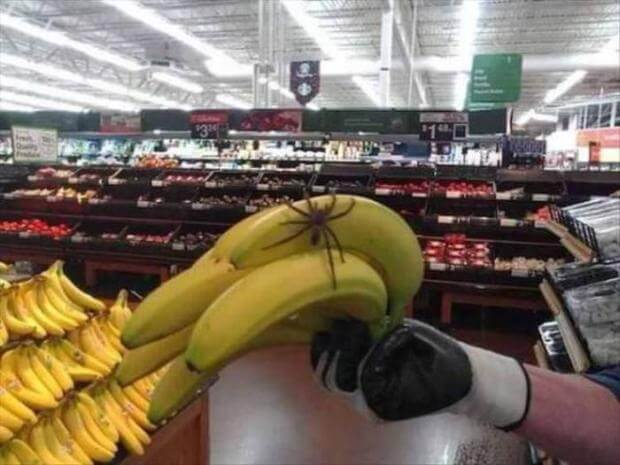 20 Pictures Of People Who Were Truly Unlucky - Do spiders like bananas