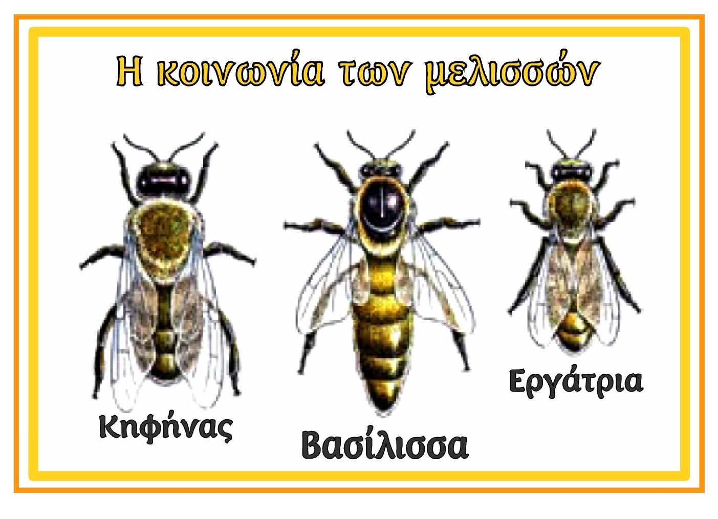 ΔΗΜΟΤΙΚΟ ΣΧΟΛΕΙΟ ΜΕΓΑΛΟΧΩΡΙΟΥ: Ο θαυμαστός κόσμος της μέλισσας