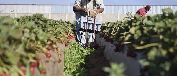 Alemanes protestan contra políticas agrícolas mundiales