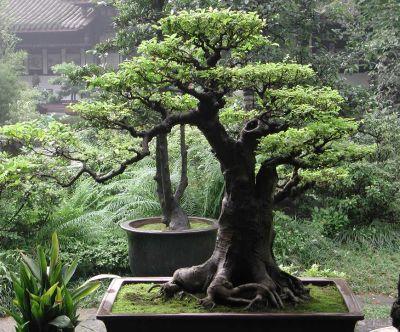 Garden Design Bonsai Garden