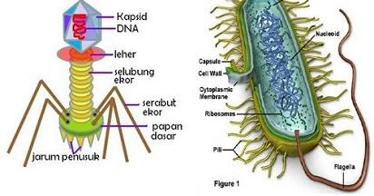 Sama-sama Bisa Menimbulkan Penyakit, Ini 6 Perbedaan Virus ...