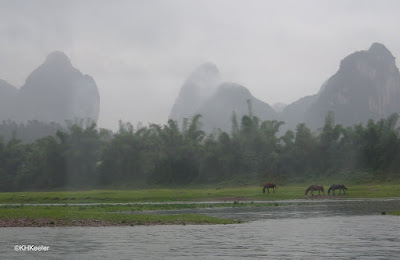 Bamboo along the Li River