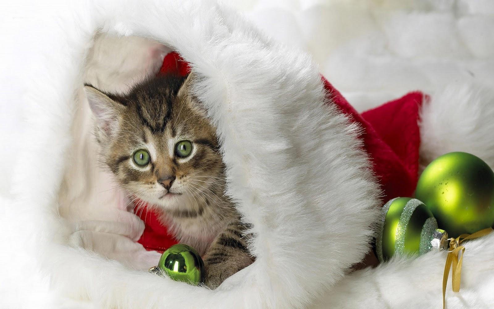 Kitten Achtergronden | HD Wallpapers