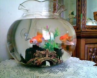 Penjagaan Ikan Hiasan Kesilapan Biasa Akuarium Baru