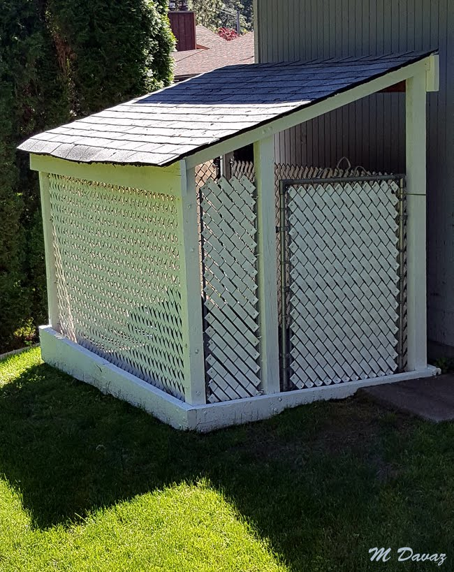 Studio Window Dog Kennel