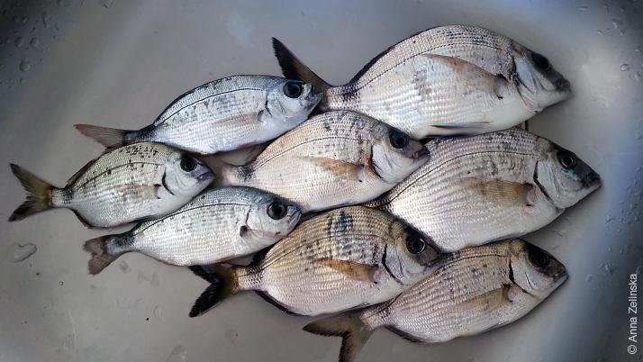 Рыба Адриатического моря, Черногория