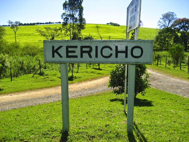 Kenya: the tea fields </br>of Kericho | Minor Sights