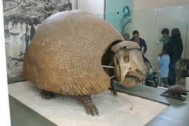 Glyptodon Giant Armadillo - Giants of the Americas