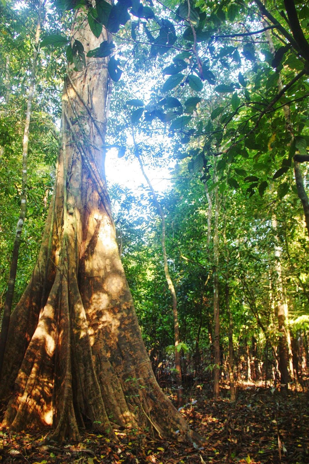 A floresta amazônica