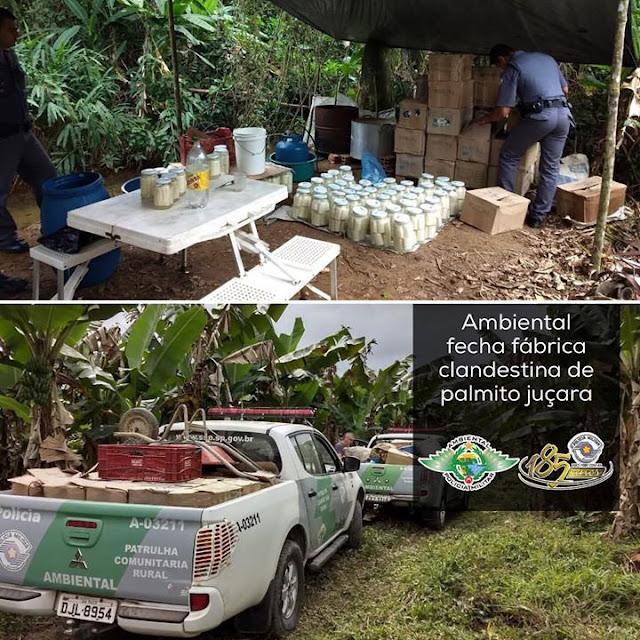 Policia Ambiental fecha Fabrica Clandestina de Palmito Juçara em Sete Barras