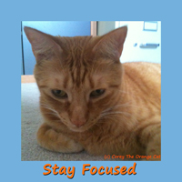 Corey The Orange Cat - Stay Focused