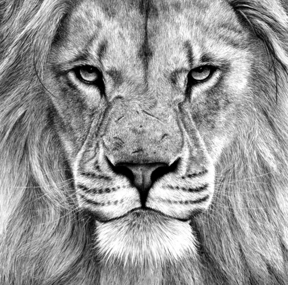 Charcoal charcoal pencil drawing nature in art