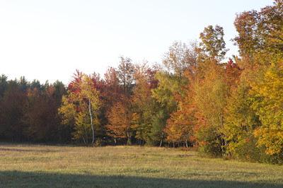drzewa, jesień, czerwień, pomarańczowy; źródło: freenaturestock.com