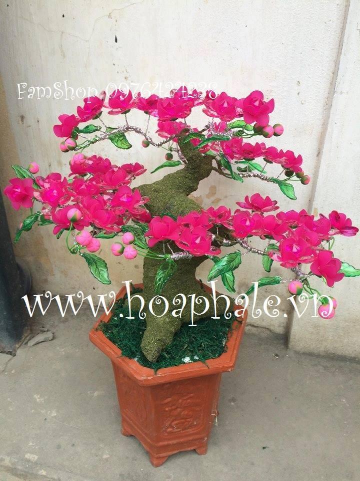 Goc bonsai mai dao tai Chuong Mi