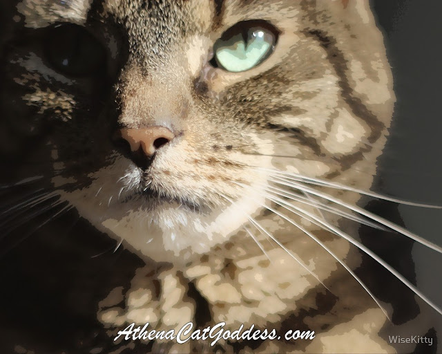 Tabby cat digital art