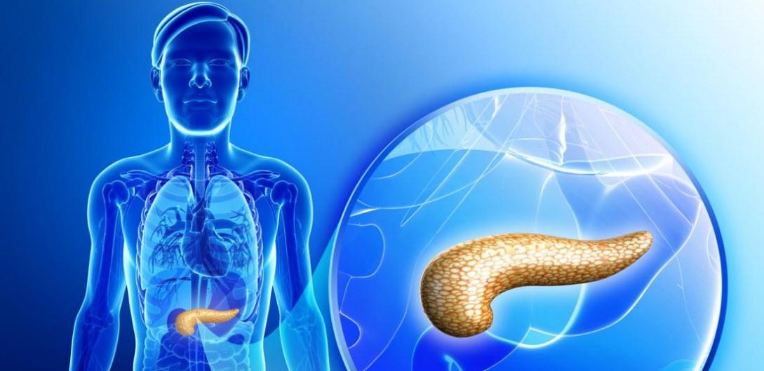 Glándulas del cuerpo humano: el hígado y el páncreas - Biología