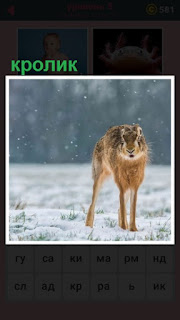 651 слов на поле в зимнее время стоит кролик 5 уровень