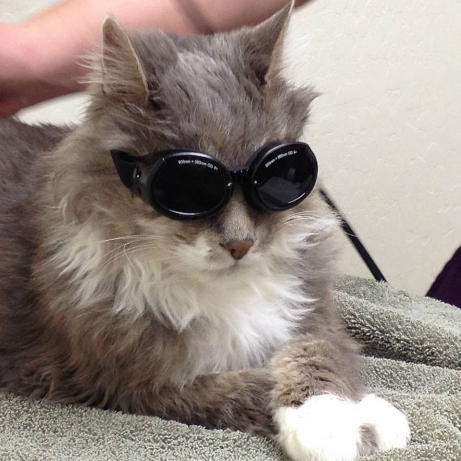 Funny cats - part 93 (40 pics + 10 gifs), cat wears goggle