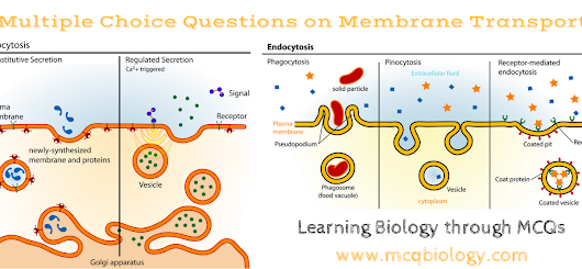 Multiple Choice Questions on Membrane Transport MCQ