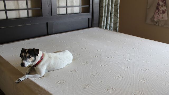 Mattress review from a spoiled dog