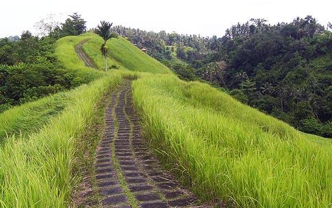 Backpacker Ke Bali dan bukit campuhan