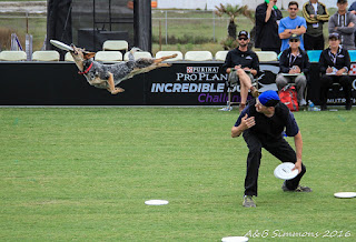 2016:  Purina Pro Plan Incredible Dog Challenge Western Regionals