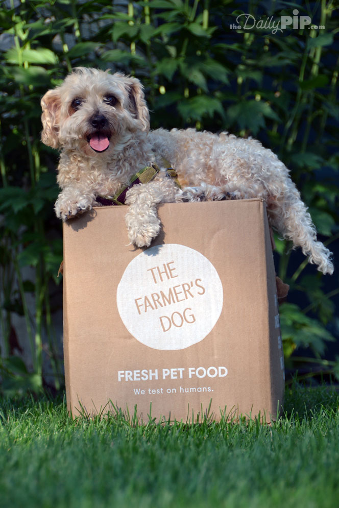 The Farmer's Dog is tested on humans not dogs