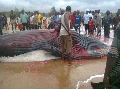whale caught ondo state