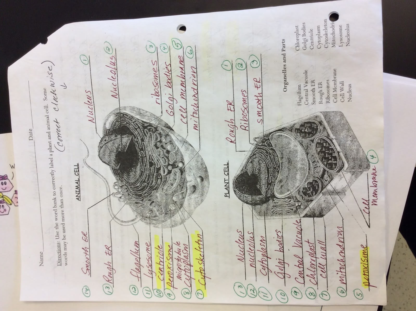 Printables Of Cell A Bration Worksheet Answers