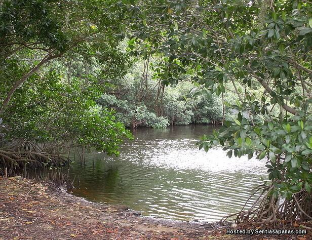 Florida's Everglades