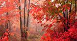 Τοπίο και ο ρομαντισμός της φύσης το φθινόπωρο
