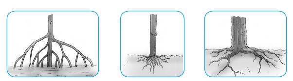 Bagian Tubuh Tumbuhan - Pengertian