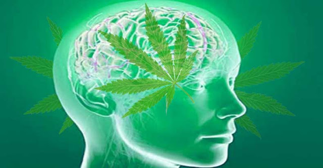 Image result for 7 Ways Cannabis Can Protect The Brain
