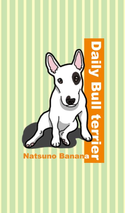 Daily Bull terrier
