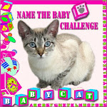 "Baby Cat's ""I Need a Grown-Up Name"" Contest"