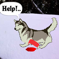 WowEscape Save The Sled Dog Walkthrough