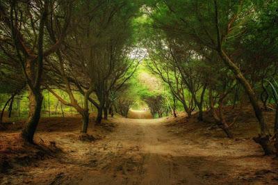 Rute menuju Pantai Cemara Sewu