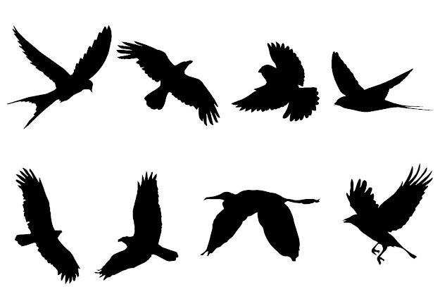 Bird Free Vector Art   Free Downloads