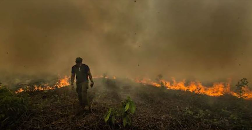Here's How The Amazon Rainforest Fire Actually Started | 20% Of The Worlds Oxygen Gone
