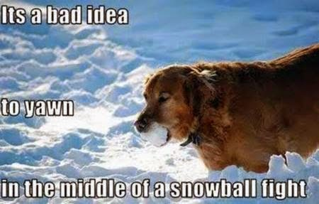 9 Funny Captioned Animal Pictures