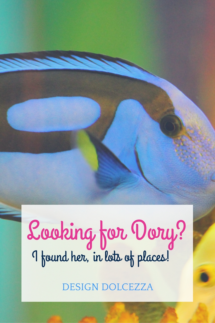 Looking for Dory? I found her! Finding Dory Blue Tang