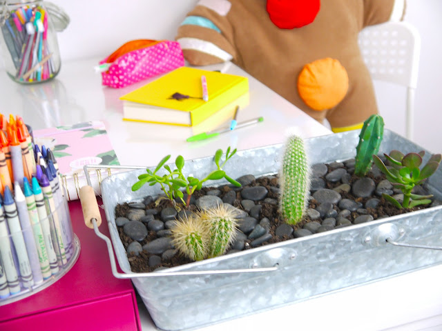 silver tray of cacti on a white desk, with yellow notebook and pink pencil case behind it