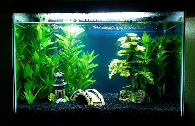 Fish tank with natural-looking fake plants