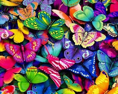 Imagenes de mariposas de colores - coloridas