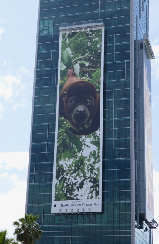 Earth Shot on iPhone Andrés M Monkey billboard