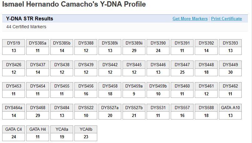 Y Haplogroup R1b1a2a1a1b (S116+)